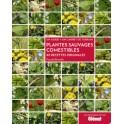 PLANTES SAUVAGES COMESTIBLES 40 recettes originales