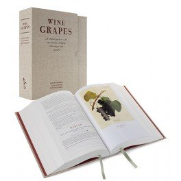 WINE GRAPES (ANGLAIS)